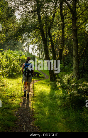 Female walker enjoying early morning sunlight through a wooded stretch of Hadrian's Wall - Stock Photo