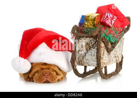 santa's sleigh - dogue de bordeaux puppy santa laying beside sleigh full of presents - Stock Photo