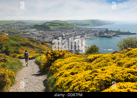 UK, Wales, Ceredigion, Aberystwyth, walker enjoying elevated view of seafront from Constitution Hill - Stock Photo