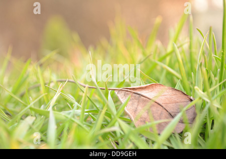 Fallen Leaf in Natural Grass Right - Stock Photo
