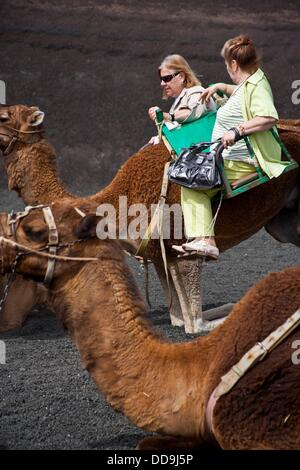 Camels in Timanfaya Volcanoe National Park in Lanzarote, Canary Islands, Spain - Stock Photo
