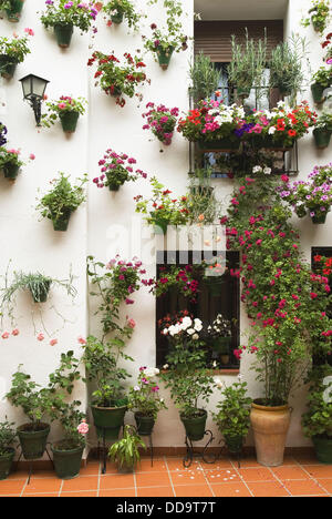 Festival of patios Cordoba Andalucia Spain. El Concurso de los patios Stock P...