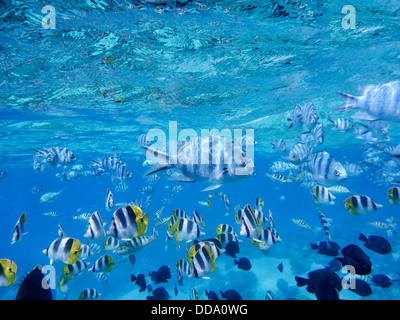 Tropical fish. Bora Bora. French Polynesia - Stock Photo
