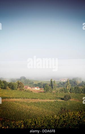 Vineyards at Monbazillac, Aquitaine, France - early morning mist over vineyards at Monbazillac, a village near Bergerac - Stock Photo