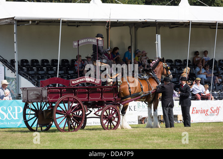 A traditional ale cart and shire horse are judged at a county show in England - Stock Photo