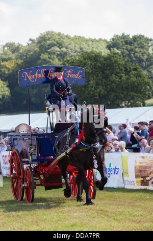A traditional supply cart and shire horse performing at a county show in England - Stock Photo