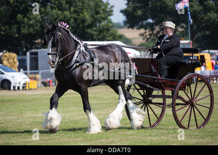 A traditional buggy and shire horse performing at a county show in England - Stock Photo
