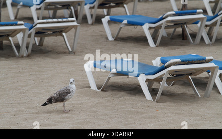 A seagull stands near sunbathing hammocks in the beach of Magaluf on the Spanish island during a summer rainy day - Stock Photo