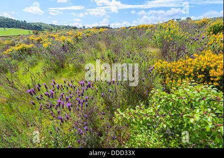 Wild flowers in Algarve Portugal - Stock Photo