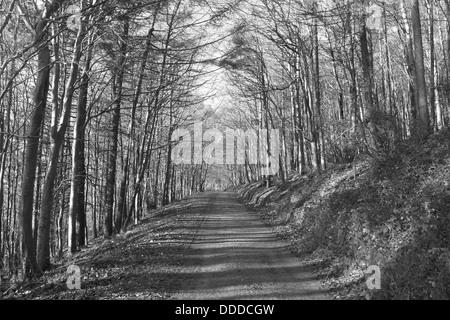 Tree Tunnel, Wicklow, Ireland - Stock Photo