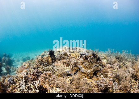The sun illuminating a tropical coral reef - Stock Photo