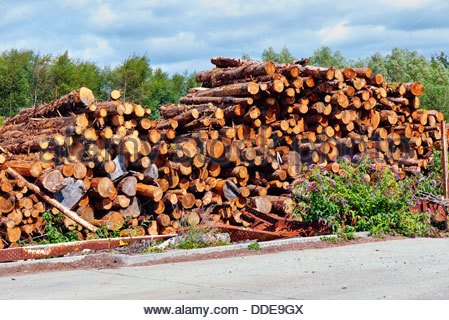 pile of sawn logs stacked on wasteland - Stock Photo