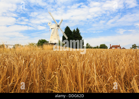 19C Kentish smock mill white wooden windmill beyond a field of ripe arable Barley crop ready for harvest in late - Stock Photo