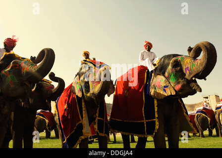 Mahouts with elephants in Elephant Festival, Jaipur, Rajasthan, India - Stock Photo