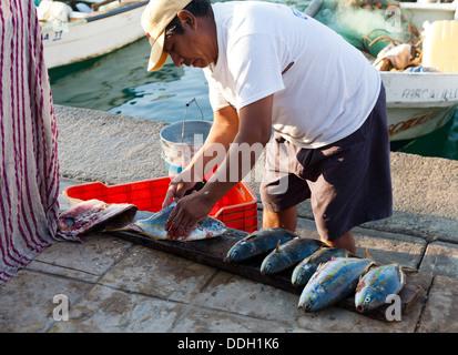 Fisherman gutting his catch, early morning fish market, Bahia de Santa Cruz, in Huatulco, Mexico. - Stock Photo