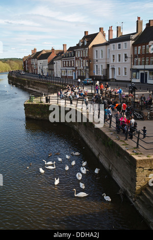 Tourists feeding swans on the River Severn at Severnside South, Bewdley, Worcestershire, England - Stock Photo
