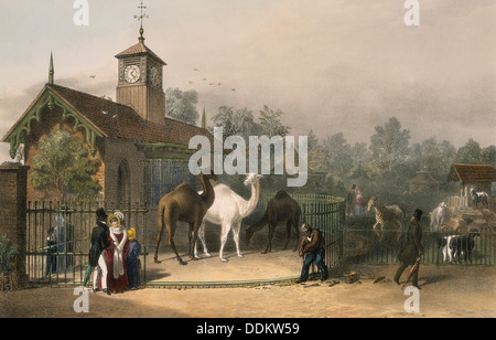 Zoological Gardens, Regent's Park, Marylebone, London, 1835. Artist: Unknown - Stock Photo