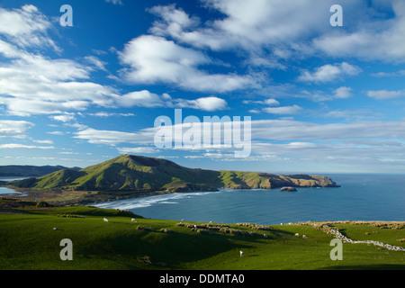 Sheep, farmland, Allans Beach and Mt Charles, Otago Peninsula, Dunedin, Otago, South Island, New Zealand - Stock Photo