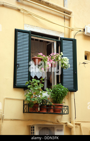 Typical shuttered window in a pale lemon building with flowers and hanging baskets in Corfu Town, Greece - Stock Photo