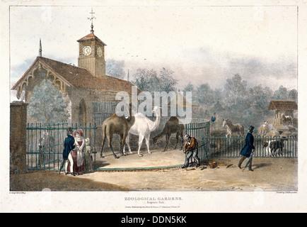Zoological Gardens, Regent's Park, London, 1835. Artist: Charles Joseph Hullmandel - Stock Photo