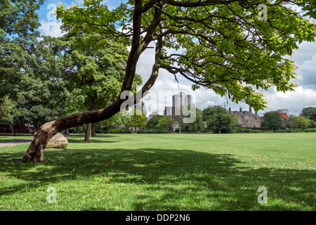 A view of the David Murray John tower in central Swindon, Wiltshire, UK, from across Faringdon park near the town - Stock Photo
