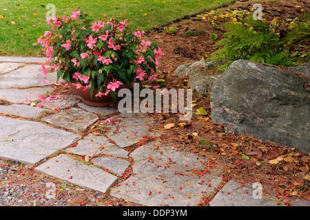 Patio Stones And Begonia Flowers Sudbury Ontario   Stock Photo
