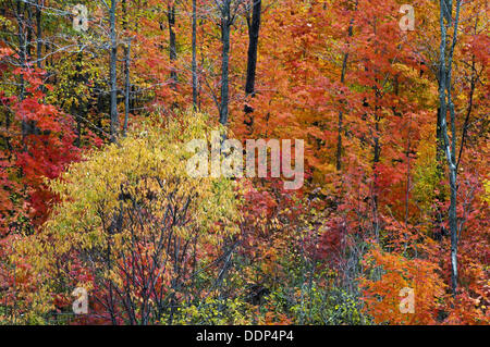 Fall foliage- maples and willow. Parry Sound, Ontario, Canada - Stock Photo