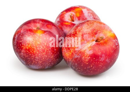 plum red group on white background - Stock Photo