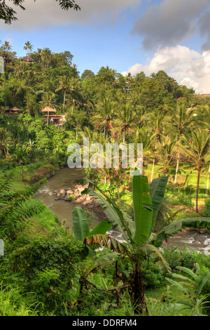 Indonesia, Bali, Ubud, Sayan Valley and Ayung River - Stock Photo