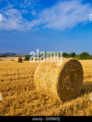 Wheat field harvested and straw bales made Lincolnshire Wolds England UK GB EU Europe - Stock Photo