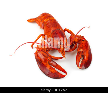 Red lobster isolated on white background - Stock Photo