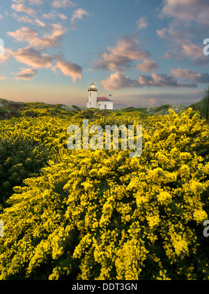 Coquile River Lighthouse with gorse. Bandon, Oregon - Stock Photo