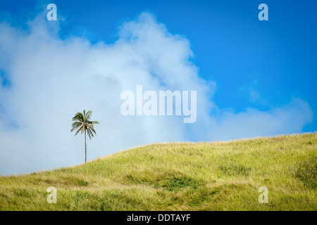A lone coconut palm tree on the highest green hill of Aitutaki island blowing in the wind against a blue sky, Cook - Stock Photo