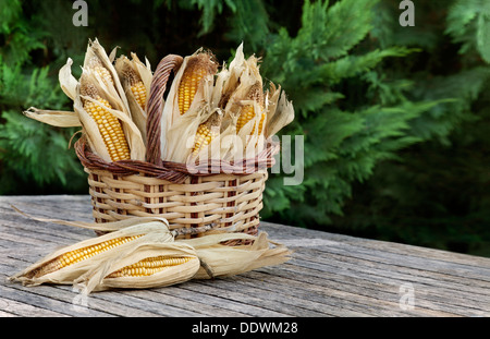Corncobs in basket.Gardening ambiance - Stock Photo