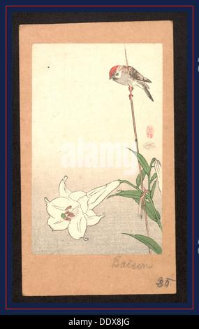 Yuri ni shokin, Small bird on lily plant - Stock Photo