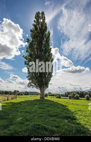 Tree on farmland at Castor near Peterborough - Stock Photo