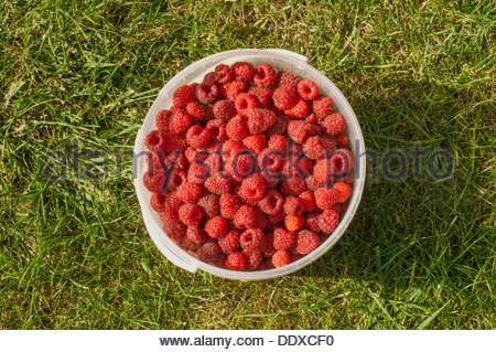 Sweet red raspberries in a bowl on the green grass - Stock Photo