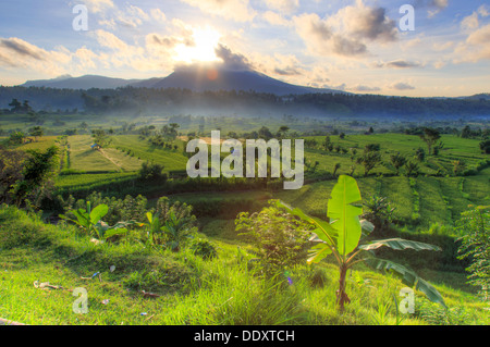 Indonesia, Bali, Tirta Gangga, Rice Terraces with Gunung Lempuyang and Gunung Seraya in the background - Stock Photo