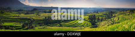 Indonesia, Bali, Central Mountains, Jatiluwih Rice Fields (UNESCO Site) - Stock Photo