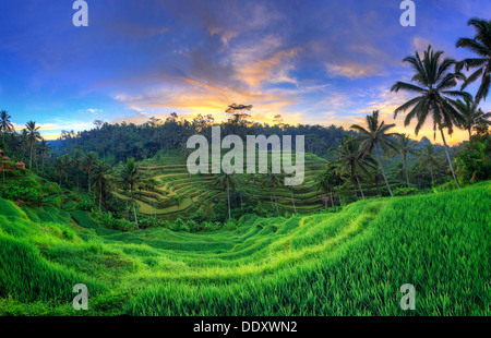 Indonesia, Bali, Ubud, Ceking Rice Terraces - Stock Photo