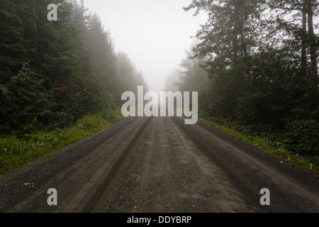 Straight deserted dirt road in the fog in wilderness of Alaska on a summer day - Stock Photo