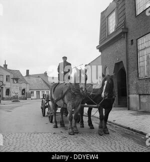 Olof Friberg, the last driver at Landskrona, with his two horses The Girl and Lottie, Sweden, 1950. From the Landskrona - Stock Photo