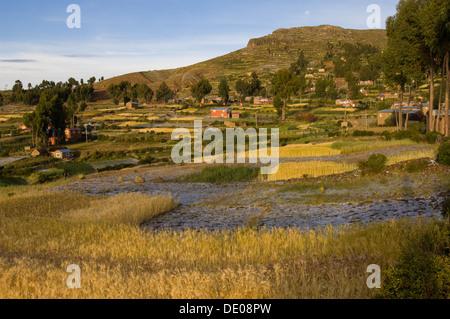 Fields of crops at a village on Amantani Island, Lake Titicaca, near Puno, Peru - Stock Photo