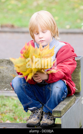 A little boy collecting autumn leaves in a bunch - Stock Photo