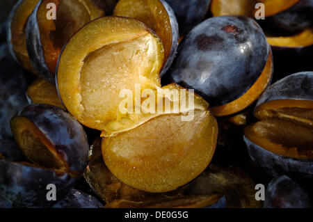Sliced Plums (Prunus domestica) - Stock Photo