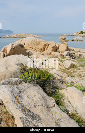 Mediterranean vegetation growing in granite rock crevices at the coast near Olbia, Sardinia, Italy, Europe - Stock Photo