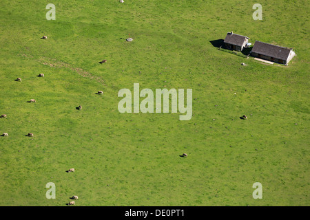 View of the Seealp on Lake Seealpsee, cows, Appenzell, Alpstein, Switzerland, Europe - Stock Photo