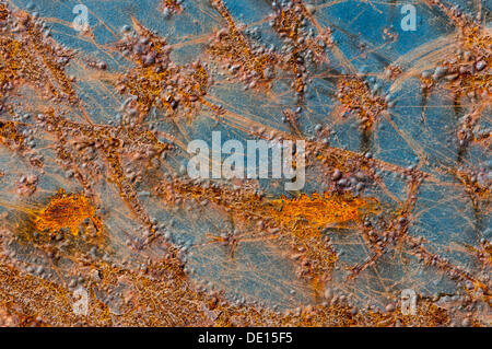 Metal surface with rust and remains of blue paint - Stock Photo
