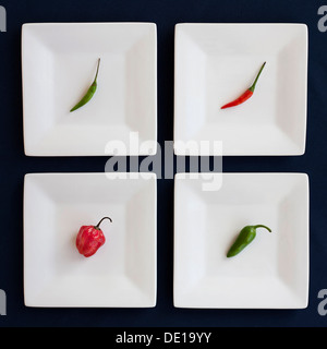Four assorted chili peppers, on separate square plates. Red, Green, White, Blue. Bird's eye, Scotch Bonet, Jalapeño. - Stock Photo