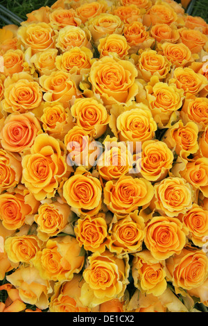 Bouquet of yellow roses - Stock Photo